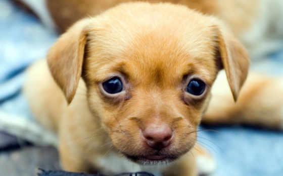 собака, dogs, взгляд