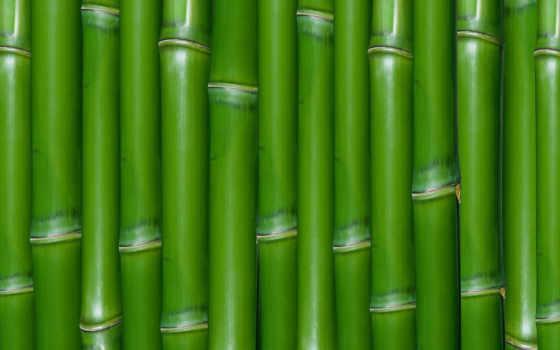 бамбук, текстура, зелёный