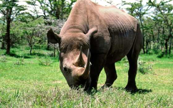 носорог, зооклубе