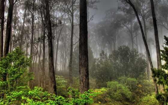 full, природа, красивые, trees, jpeg, подборка, качественных, мрачные,