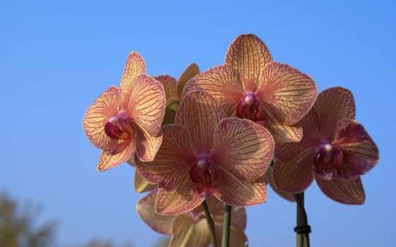 cielo, орхидеи, orquídeas, azul, fondos, azules, pantalla, biosfera, заставки,