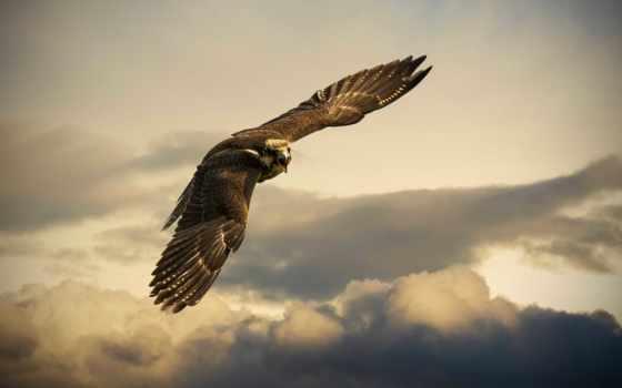 полет, небо, орлан, крылья, oblaka, орла, ipad, птица, белоголовый,