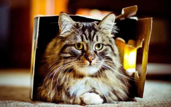 коробка, котик