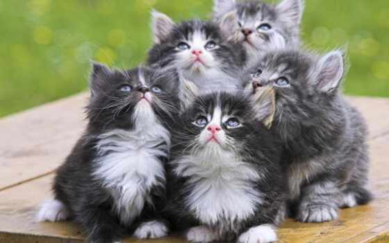 котята, животные, пушистые, животных, взгляд, подб