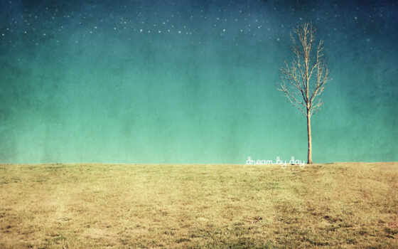 дерево, поле