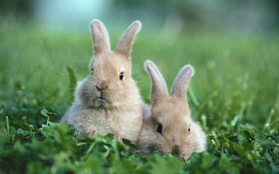 животные, кролики