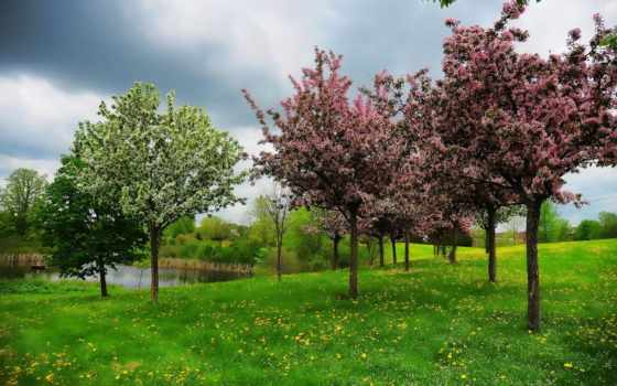 primavera, parede, papel, lagoa, paisagem, música, colina, para, árvores, мар,