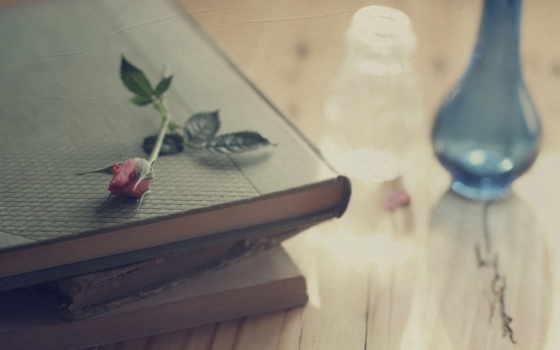 books, роза, книга