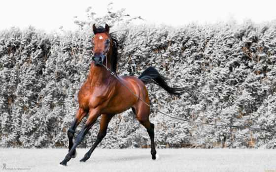 zhivotnye, лошадь
