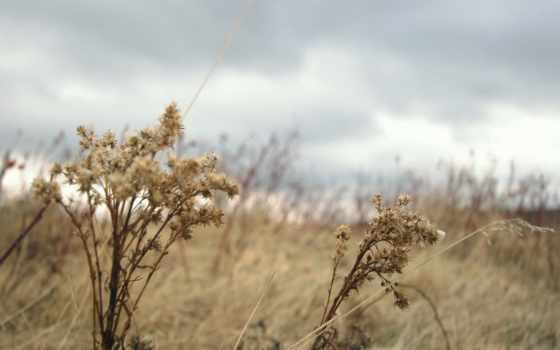 трава, осень, степь, природа, сухая, тучи, пожухлая, пасмурно, ветер,