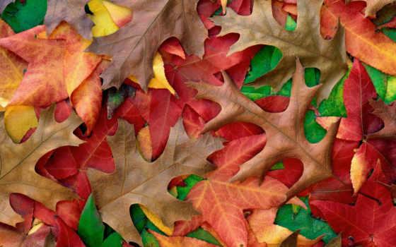 осень, осенние, главная, музыка, chekalin, золотая, сергей, душі,