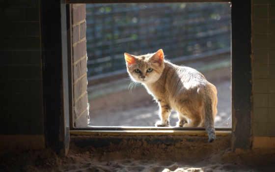 кот, red, окно, смотрит, песчаный, картинка,