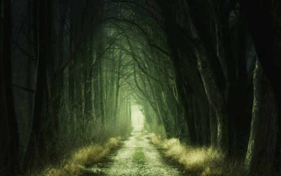 лес, dark, free, прохождение, widescreen,