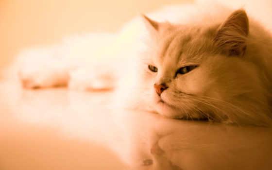 cat, free Фон № 12776 разрешение 1920x1200