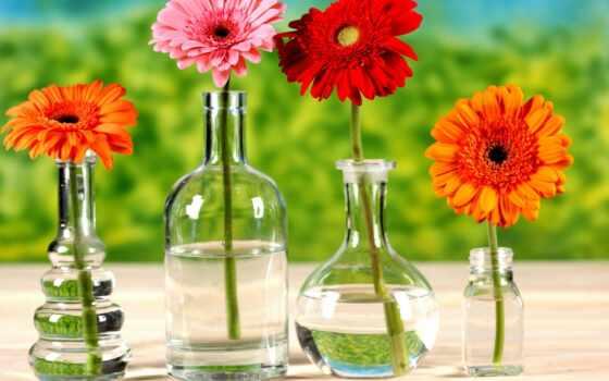 герберы, cvety, хризантемы