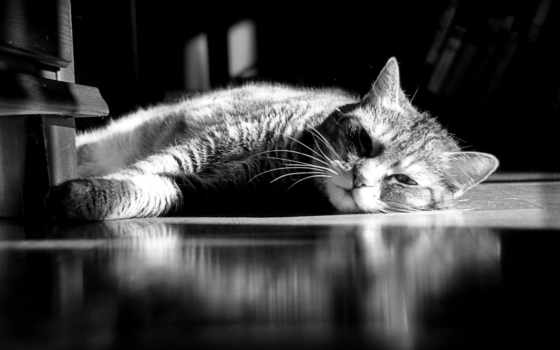 июня, kot, кошка