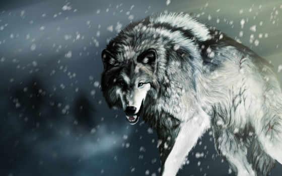 волк, найти, qr