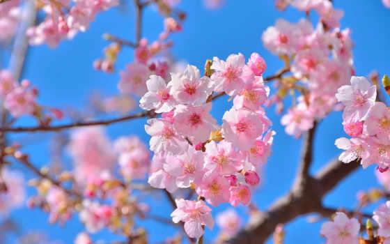 весна, цитатник, марта