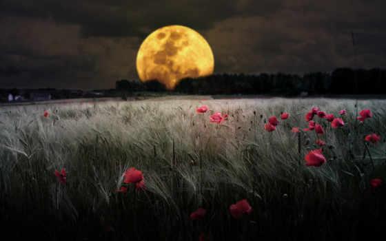 луна, full, ночь