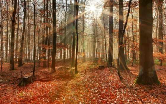 rays, thiên, nhiên, сквозь, разных, яркие, солнечные, ярких, освещают, лучах, солнечных,