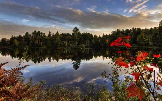 quebec, bosques, flowers