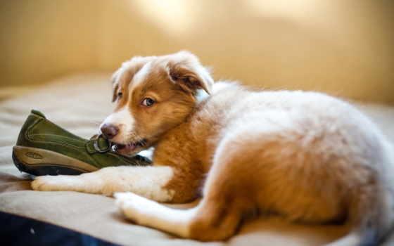 щенок, батинок, обои, любой, оформить, помогут, шт, мони