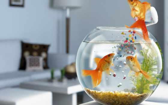 золотая рыбка кормит подружек