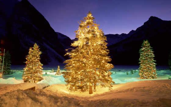 зима, елка