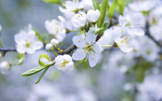 весна, ветка