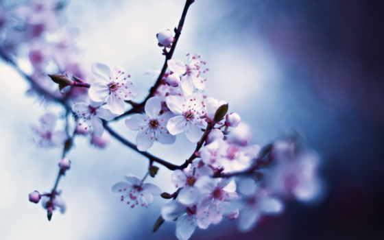 макро, цветы, весна