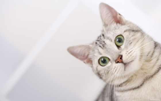 кошки, кот, коты Фон № 99661 разрешение 1920x1200