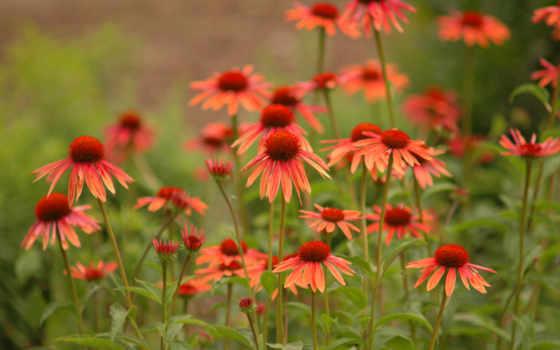 цветы, красивые, полевые, browse, трава, цветах, бабочки, сидят,