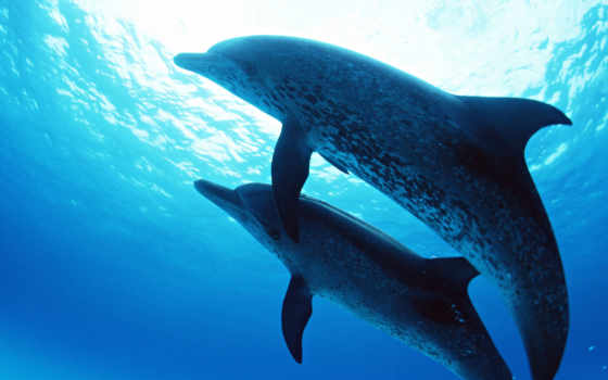дельфины, дельфинов, pair,