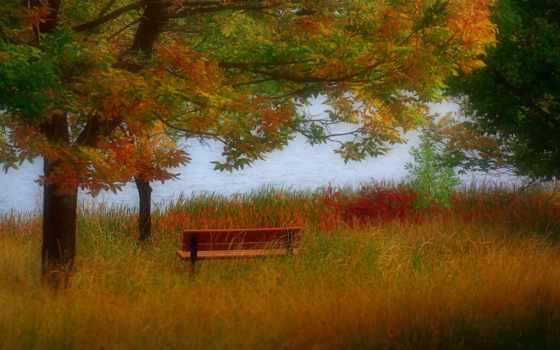 automne, ecran, paysage