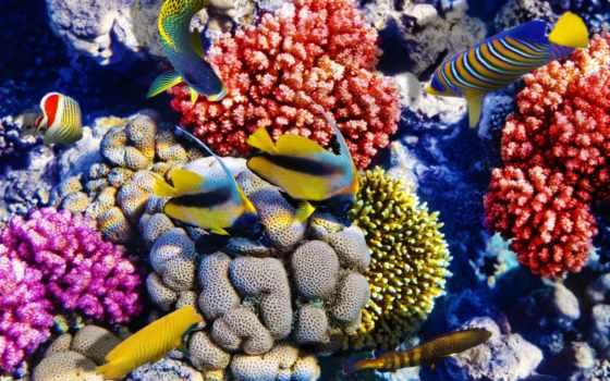 coral, reefs, риф, images, растение, are, animal, stock, photos,