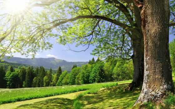 summer, trees, зелёный, трава, природа, лес, sun, блики,