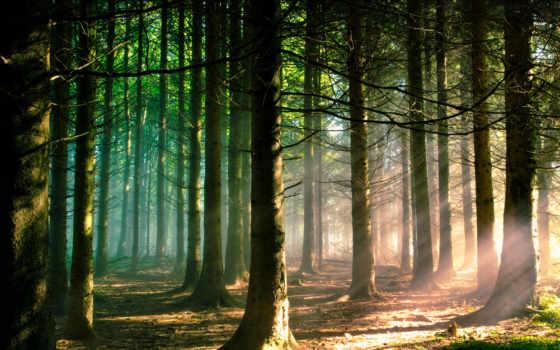 лес, утро, высокого, разрешения, природа, печенюшками, rays, лесу, coffee, легкими, солнца,