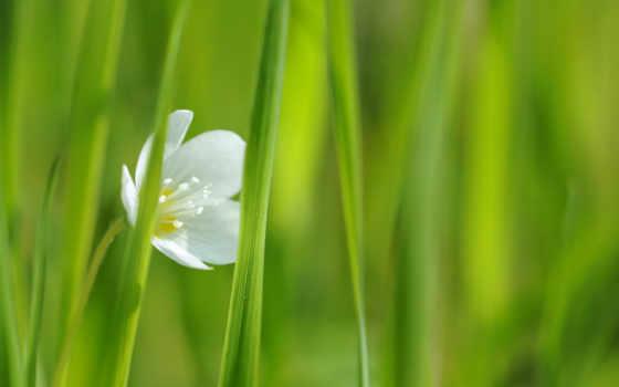 fleur, fleurs, blanche, fond, ecran, printemps, весенние, cvety, фотопанно,