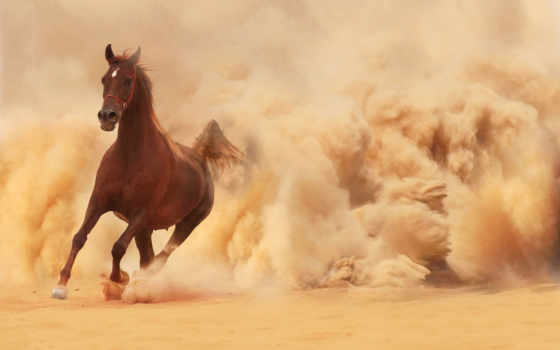 лошадь, песок, пыль