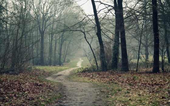 осень, туман, trees, лес, дорога, тропинка,