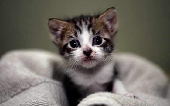 котенка, корм, месяца, найти, google,