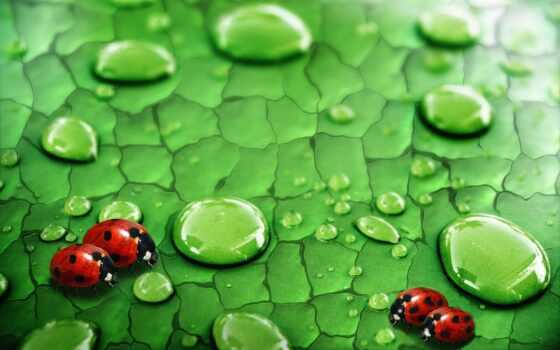 день, world, защита, место, habitat, красивый, shirokoformatnyi, free, праздник, листочек