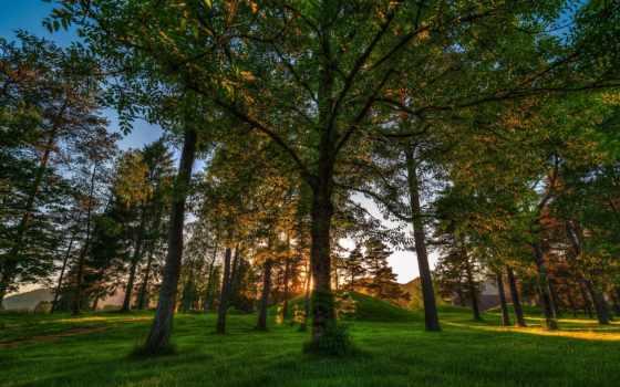 лес, norway, деревья, смотрите, завантажити, landscapes, природа,