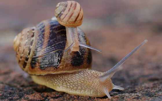 pantalla, owadów, with, quality, mollusks, fondo, snails, preview, animales, fondos,