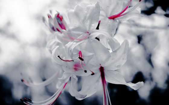 цветы, макро, white