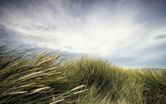 landscape, трава, bokeh