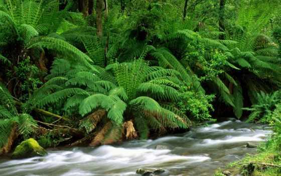 пейзажи -, лесов, landscape