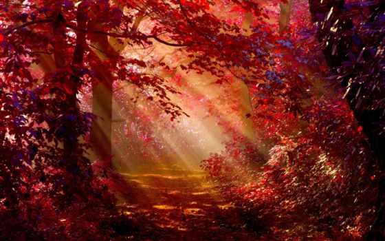 осень, лес, sunlight, природа, canvas, art, стена,