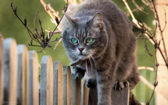 животные, категории, кошка