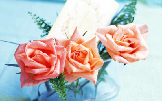 trimiteri, цветы, trandafiri, заставки, pentru, ани, cu, изображения,